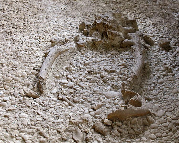 Resti Parco Paleolitico di Notarchirico - Venosa