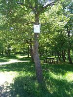 Segnalazione demanio comunale - Comune di Venosa (PZ)