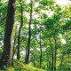 Bando Misura 16 - Redazione del Piano di Gestione Forestale